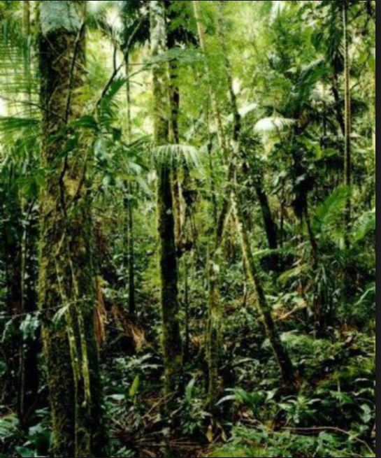"""Thomas Struth – """"New Pictures from Paradise"""""""